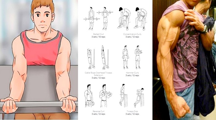 The 10 Best Arm Building Exercises For Beginning Bodybuilders Anymuscle Com